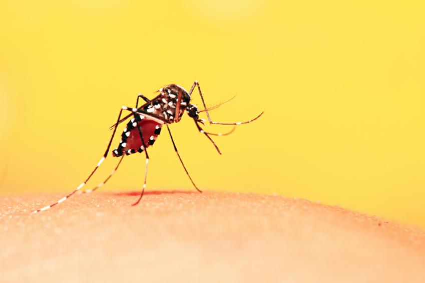 Ministério da Saúde divulga novos dados de febre amarela