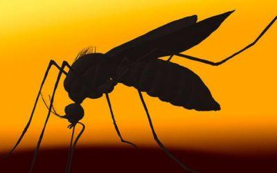 Zika: testes mostram que vacina previne doença na gravidez